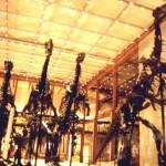 Iguanodontes